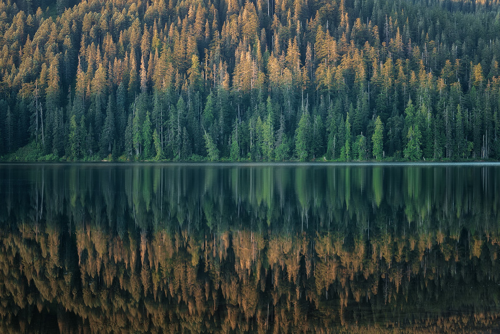 Photograph: The Lost Forest - Trees reflected in the Lost Lake in Mount Hood National Forest, Oregon.