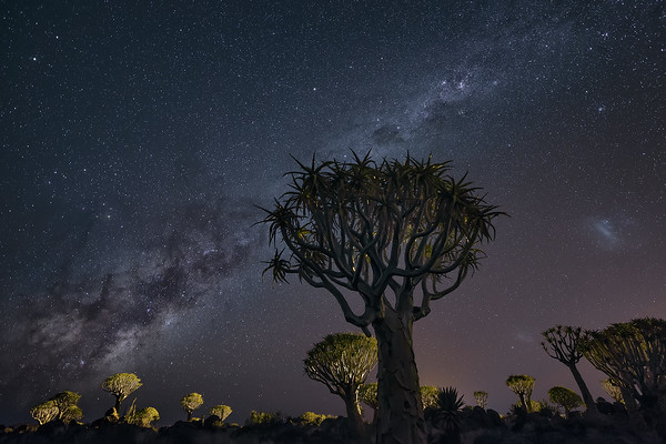 Photograph: The Invasion - Kokerbooms lit up under the Milky Way in Keetmanshoop, Southern Namibia.