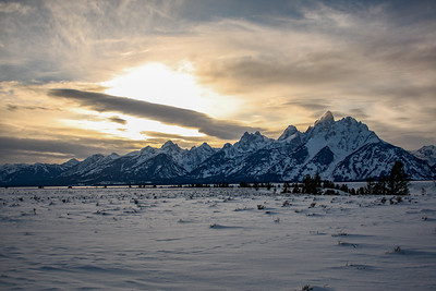 Backlit Winter