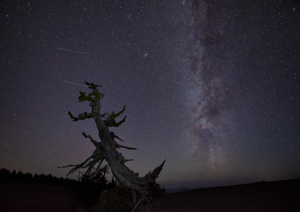 Photograph: The Gnarly Tree - An old, gnarly tree overlooking Crater Lake beneath the Milky Way.