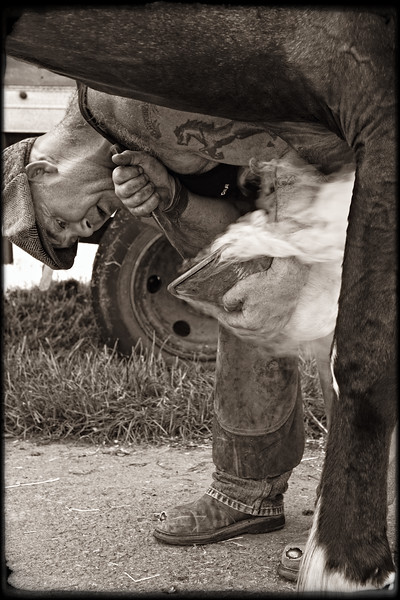 FARRIER AT WORK 2