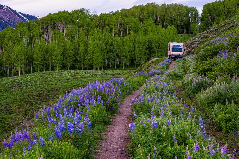 """The Lupine Trail, Colorado"""