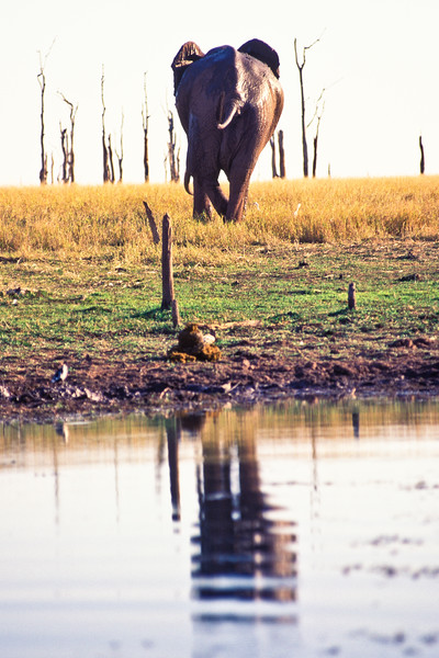 ELEPHANT WALKING AWAY, KARIBA ZIMBABWE