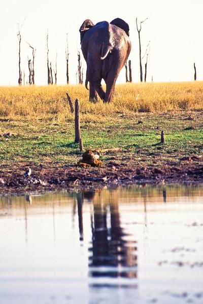 ELEPHANT WALKING AWAY, KARIBA ZIMBABWE