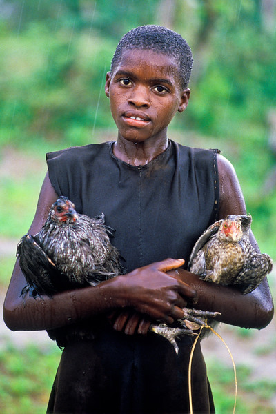 GIRL AND CHICKENS IN THE RAIN, ZIMBABWE