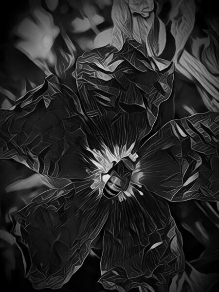 IMG_Mononoke_20190528_224748_processed.jpg