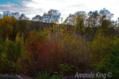 Bulgarian Autumn trees