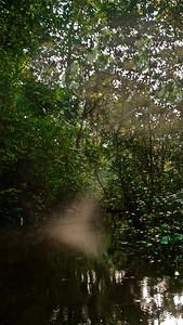 Sunlight through the forest, Yasuni National Park :)