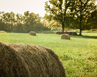 Hay Field, Ramsey, Indiana