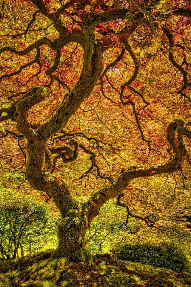 Serenity Tree