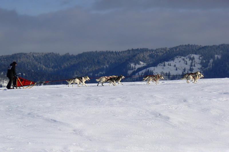American Dog Durby: Ashton, Idaho
