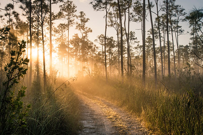 Trail Wandering