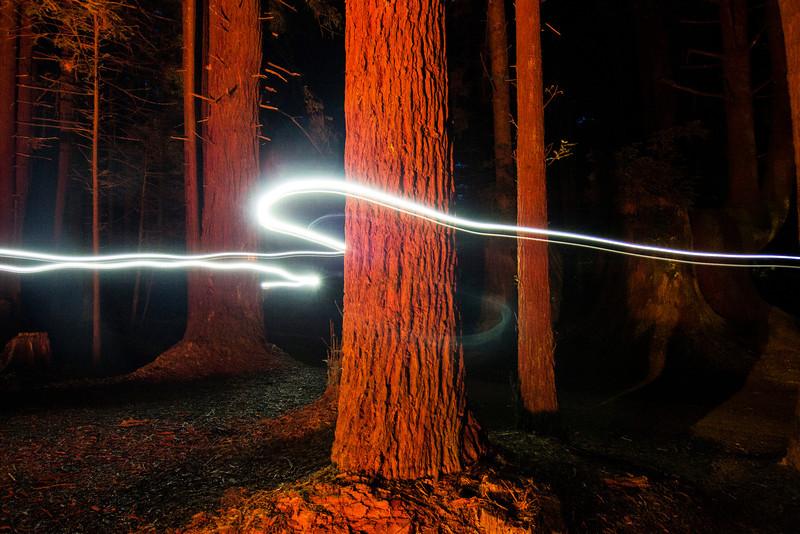 Light Trail Redwood National Park