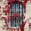 Window with Bars and Leaves