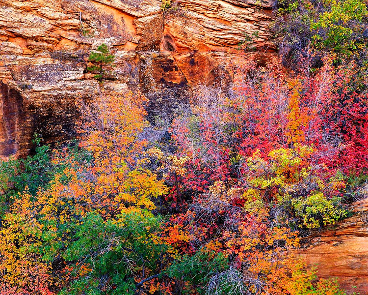 Autumn Above Clear Creek