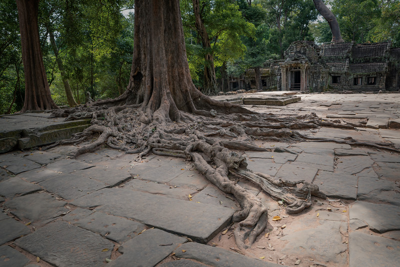 Roots of Ta Prohm