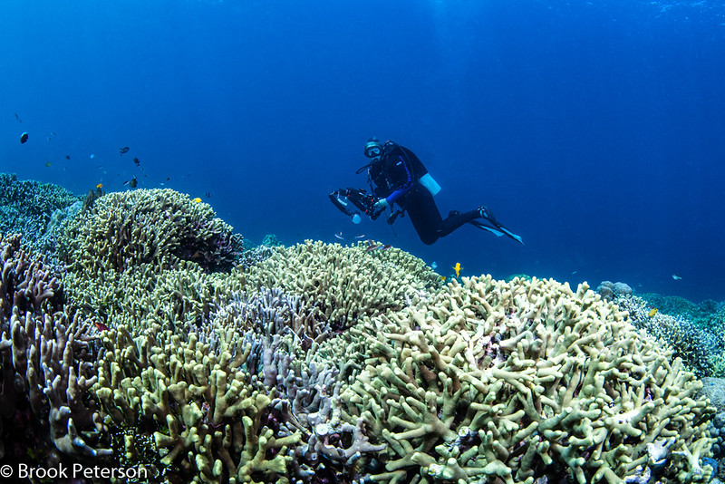 Diver over a coral reef