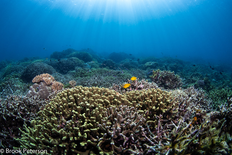 Coral Reef in Anilao