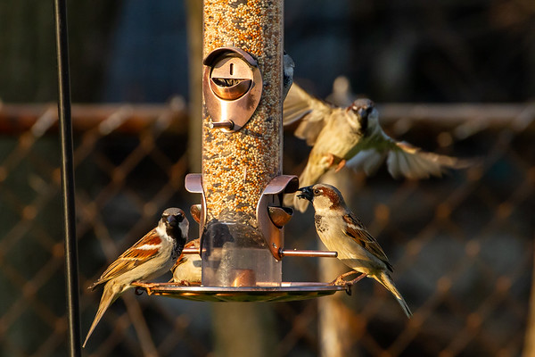 An Evening at the Feeder