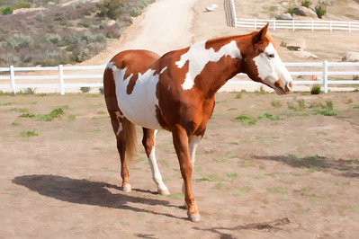 Brown And WHite Horse | Wall Art Resource
