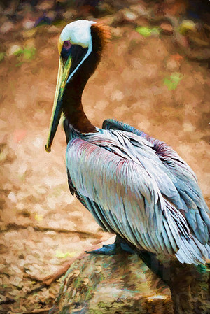 Pelican 004 | Wall Art Resource