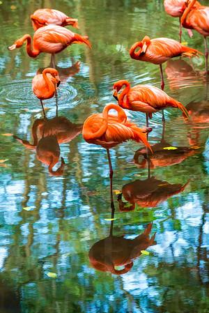 Group Of Pink Flamingos 001 | Wall Art Resource