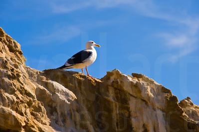 Sea Gulls Standing 003 | Wall Art Resource