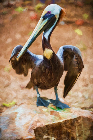 Pelican 003 | Wall Art Resource