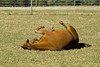 "<div class=""jaDesc""> <h4> Little Roll Before Getting Up </h4> </div>"