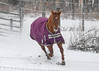 "<div class=""jaDesc""> <h4>Shiloh Galloping - January 13, 2018</h4> <p></p> </div>"