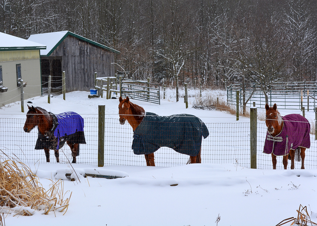 """<div class=""""jaDesc""""> <h4> Horses Hanging Out in the Paddock - December 31, 2017 </h4> This is a typical calm day in the snow.  Waiting for breakfast to be served. </div>"""