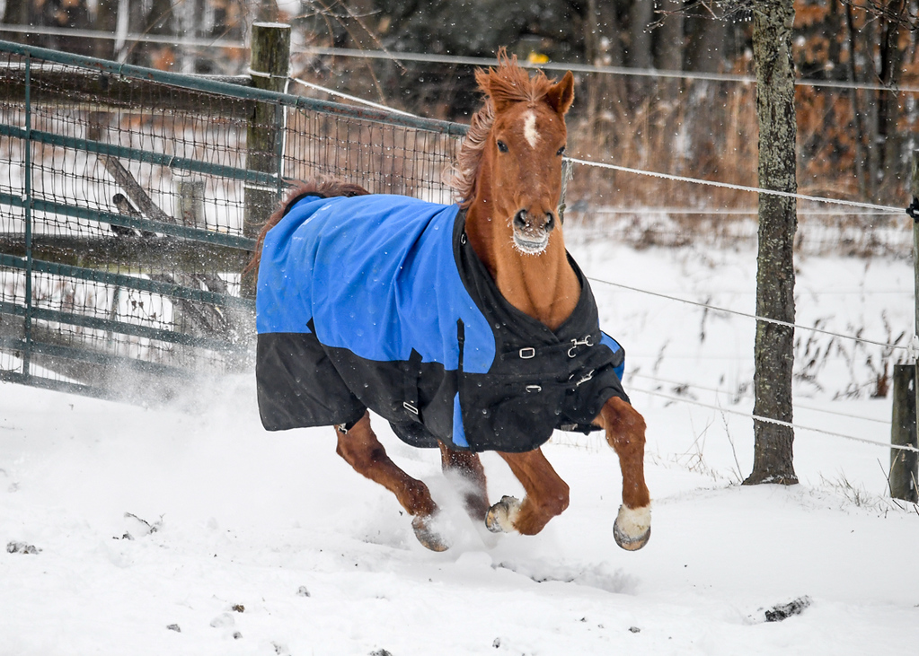 """<div class=""""jaDesc""""> <h4>Bronzz Gallops Out First This Time - January 13, 2018</h4> <p></p> </div>"""