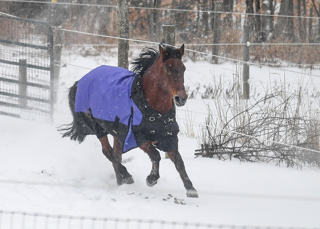 """<div class=""""jaDesc""""> <h4>Brandy Galloping - January 13, 2018</h4> <p>They would circle back to the back paddock and take turns trying to be the first one back out.  Brandy was in the lead on this run.</p> </div>"""