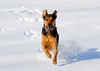 "<div class=""jaDesc""> <h4> Coby Romping Through the Snow - December 31, 2012 </h4> </div>"