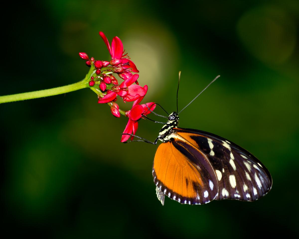 Butterfly Garden - Detroit Zoo