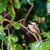 Home-Birds-130914-0454