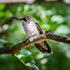 Home-Birds-130914-0291