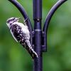 Home-Birds-130804-0256