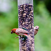 Home-Birds-130804-0247