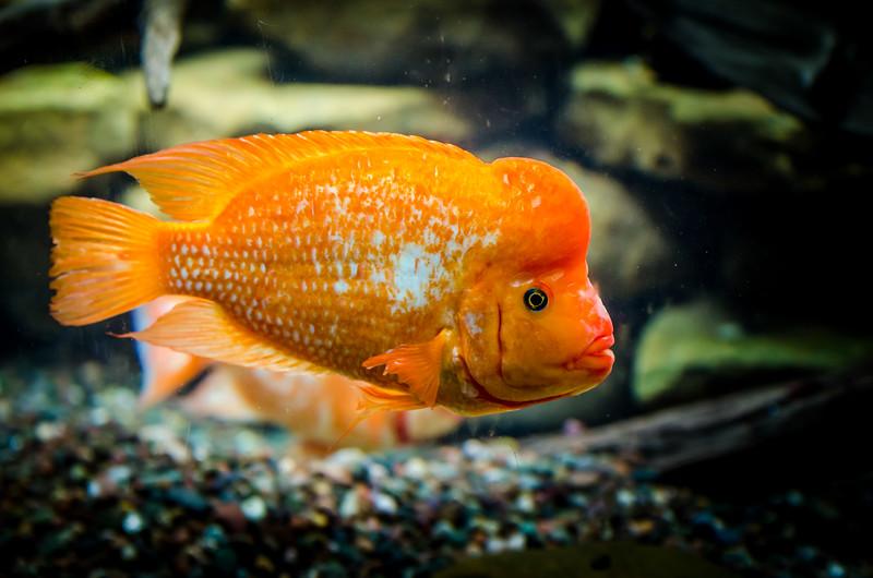 Shedd Aquarium-130719-0263