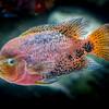 Shedd Aquarium-130719-0308