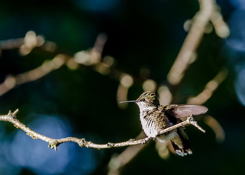 Home-Birds-130914-0384