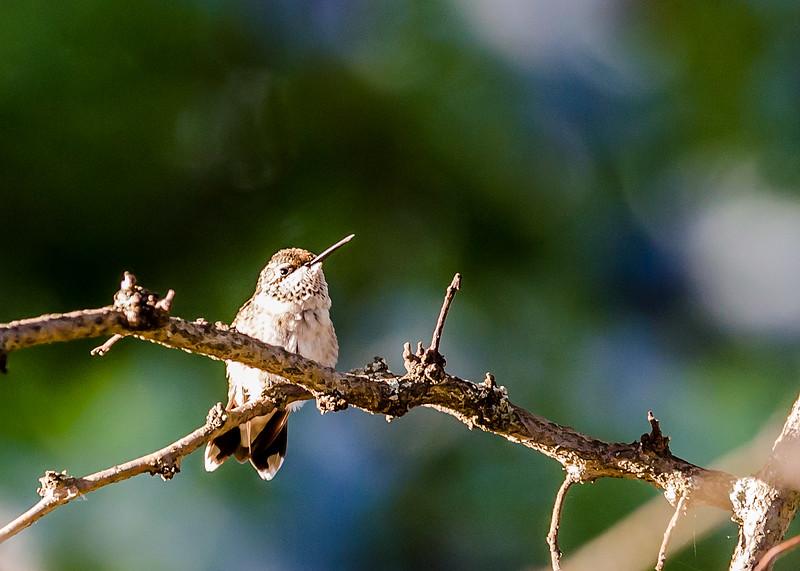 Home-Birds-130914-0413