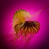Shedd Aquarium-130719-0020
