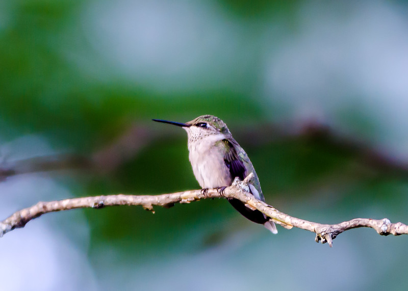 Home-Birds-130914-0475