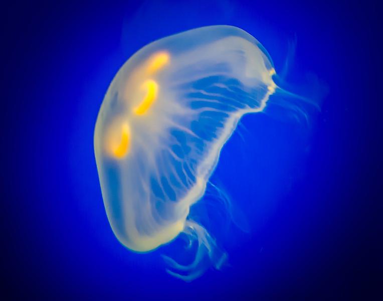 Shedd Aquarium-130719-0003