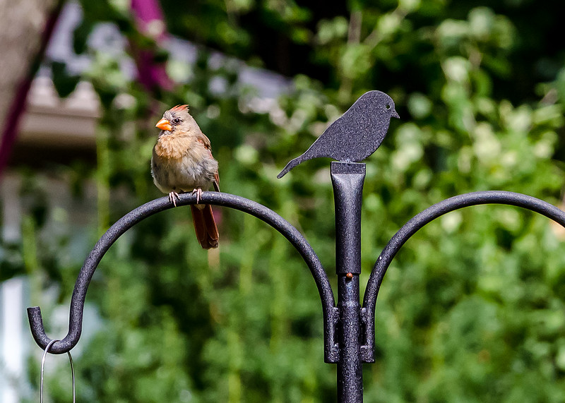 Home-Birds-130914-0344