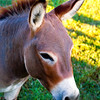 Donkey (?) near Tennessee River
