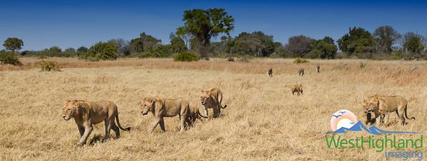 Mporota Pride Mombo Camp, Botswana