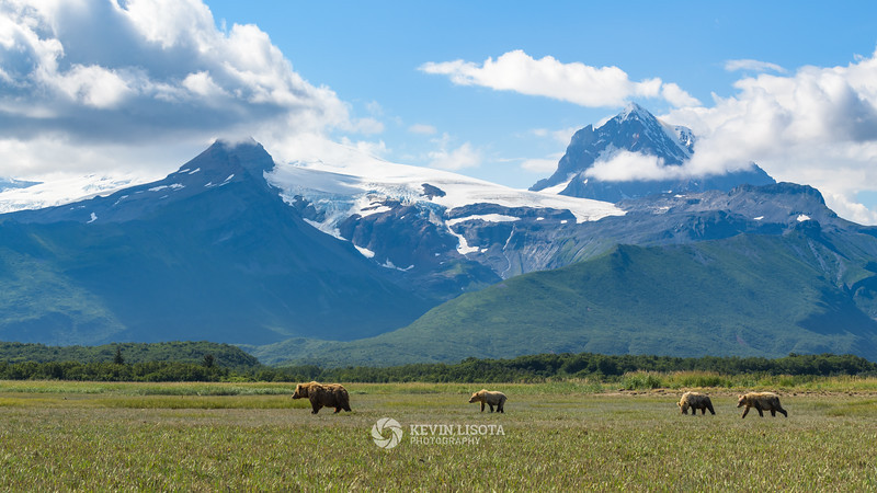 Brown bear sow leads her cubs in front of the mountains of Katmai National Park